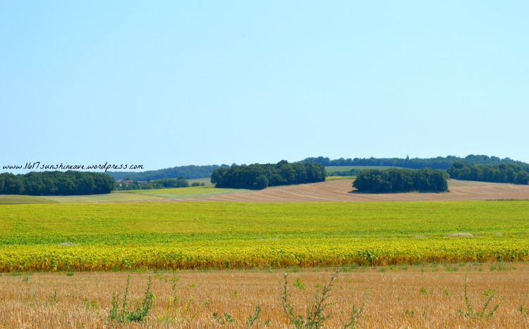 vert périgord france a drive through France a look out the window sunflower field .jpg