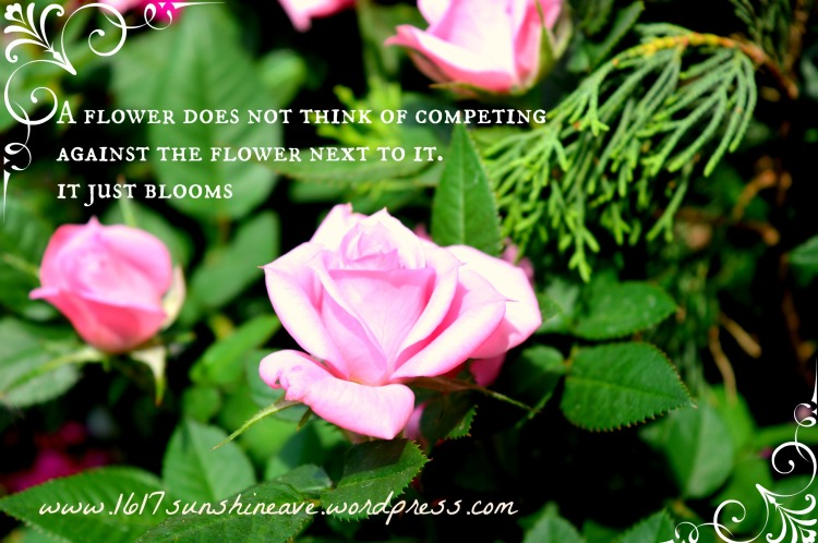 self love quote a flower does not think of competing with the flower next to it it just blooms .jpg