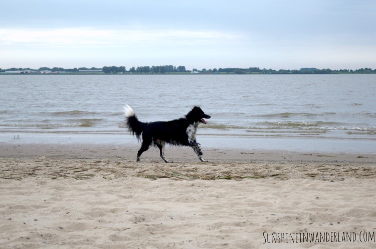 Elbe Glückstadt Dog running on the beach